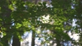 Morning sun gently breaks through the branches of green tree. Shallow DOF softly nature shot. Beautiful roundish bokeh 70816343