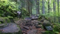Camera moves along a rocky path in a magical forest. Dense green vegetation and mossy stones. Hiking in the forest. Gimbal shot, 4K 70816351