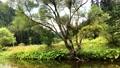 Small river 70996624