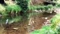 Small river 70996627