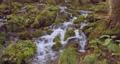 全国名水百選に選ばれた尚仁沢湧水群の風景 71042931