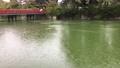 雨の降る小田原城のお堀 71244207