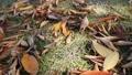落ち葉が散乱する公園の芝生に木漏れ日が当たる 71405012