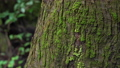 Forest tree moss slide photography 71507656