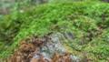 Forest rock moss slide photography 71507700