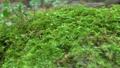 Forest rock moss slide photography 71507756