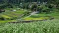 Rice terraces in Tochigura [Autumn] 71569684