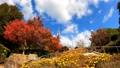 紅葉 眉山公園(徳島県徳島市)2020年11月撮影 71645130