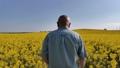 Old farmer in field of rapeseed 71699295