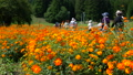 Flower field crowded with people [National Alps Azumino Park Horikin / Hotaka district] 71712608