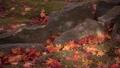 紅葉の落ち葉と光 71751323