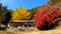 紅葉 廃校の木造校舎(香川県綾歌郡) 71752510
