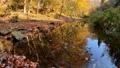 水面に映りこむ木々の紅葉(香川県柏原渓谷) 71752511