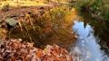 水面に映りこむ木々の紅葉(香川県柏原渓谷) 71752512