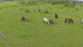 A herd of horses graze in a green meadow along the river 71877762