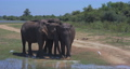 Elephants splashing mud in the National Park of Sri Lanka 71877764