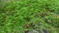 Forest rock moss slide photography 71895736