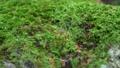Forest rock moss slide photography 71895769