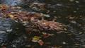 완만 한 수로 흐르는 낙엽 71917141