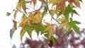 바람에 흔들리는 나뭇잎 71917143