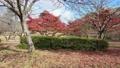 Kyoto Ono Dam Park Autumn Leaves Maple Aerial Kaze Park 4K 72022193