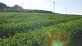Tea plantation tilt shot 72046374
