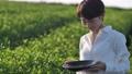 Tea field woman 72046379