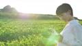 Tea field woman 72046383