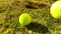 Tennis ball to play 72086657