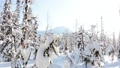 Snowy Winter Forest on a Sunny Day. Panoramic View 72140155