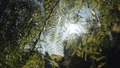 Coniferous plant and sun rays. View through the leaves of the trees. Nature concept. Summer 72204260