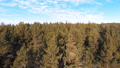 Panorama of coniferous forest in winter. 72260272