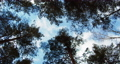 Coniferous forest and blue sky in winter. 72303610