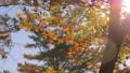 輝く太陽の下で揺れ動く秋の美しいカラフルな紅葉とそよ風 72419105