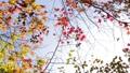 輝く太陽の下で揺れ動く秋の美しい紅葉とそよ風 72419107