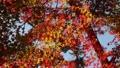 輝く太陽の下で揺れ動く秋の美しい紅葉と森林とそよ風 72419146