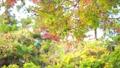 輝く太陽の下で揺れ動く秋の美しい紅葉とそよ風 72419161