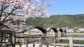 満開の桜と錦帯橋 72478928