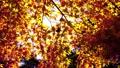 日本の秋の彩り 72545580
