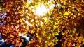 日本の秋の彩り 72545581