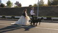 The bride and groom are walking along the highway holding two Dobermans on leashes. The groom is holding a baseball bat. 72968445