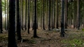 Powerful trees in beauty of the magical forest. European nature 73009350