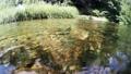 渓流の水流にカメラを沈めるイメージ 73009707