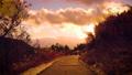 【冬】雪が積もった夕方の歩道に夕日が差し込む様子 73014583