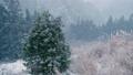 【冬】雪が降り積もる森林の様子 自然風景 73039421