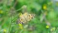 センダングサの蜜を吸うヒメアカタテハ 11月 73039728