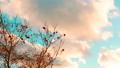 【自然風景】青空の下で雲が風に流れる様子 フィクス撮影 73072417