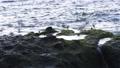 바다새 무리 작은 새 조류 생물 바다 조류 동물 73089067