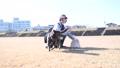 강변 여자와 개 개 개 애완 동물 달리는 강변 초원 운동 맑은 겨울 햇살 73089311