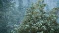 【冬】雪が降り積もる森林の様子 自然風景 73115051